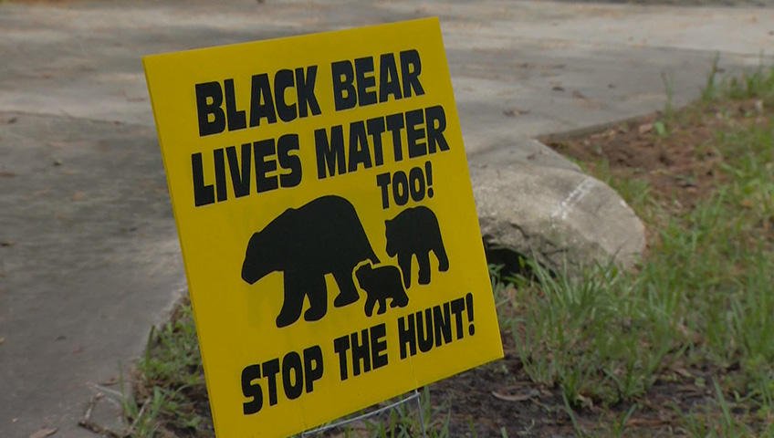 Black Bear Lives Matter' signs create controversy | Watch News Videos Online