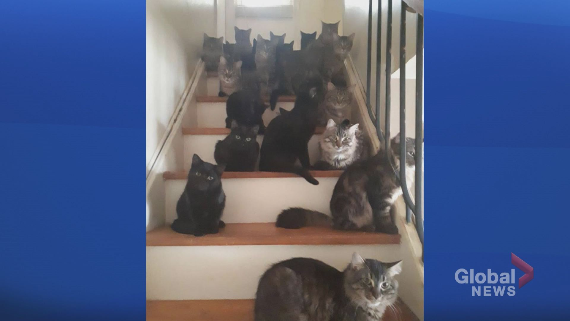 63d434ffcf More than 100 cats removed from Toronto home