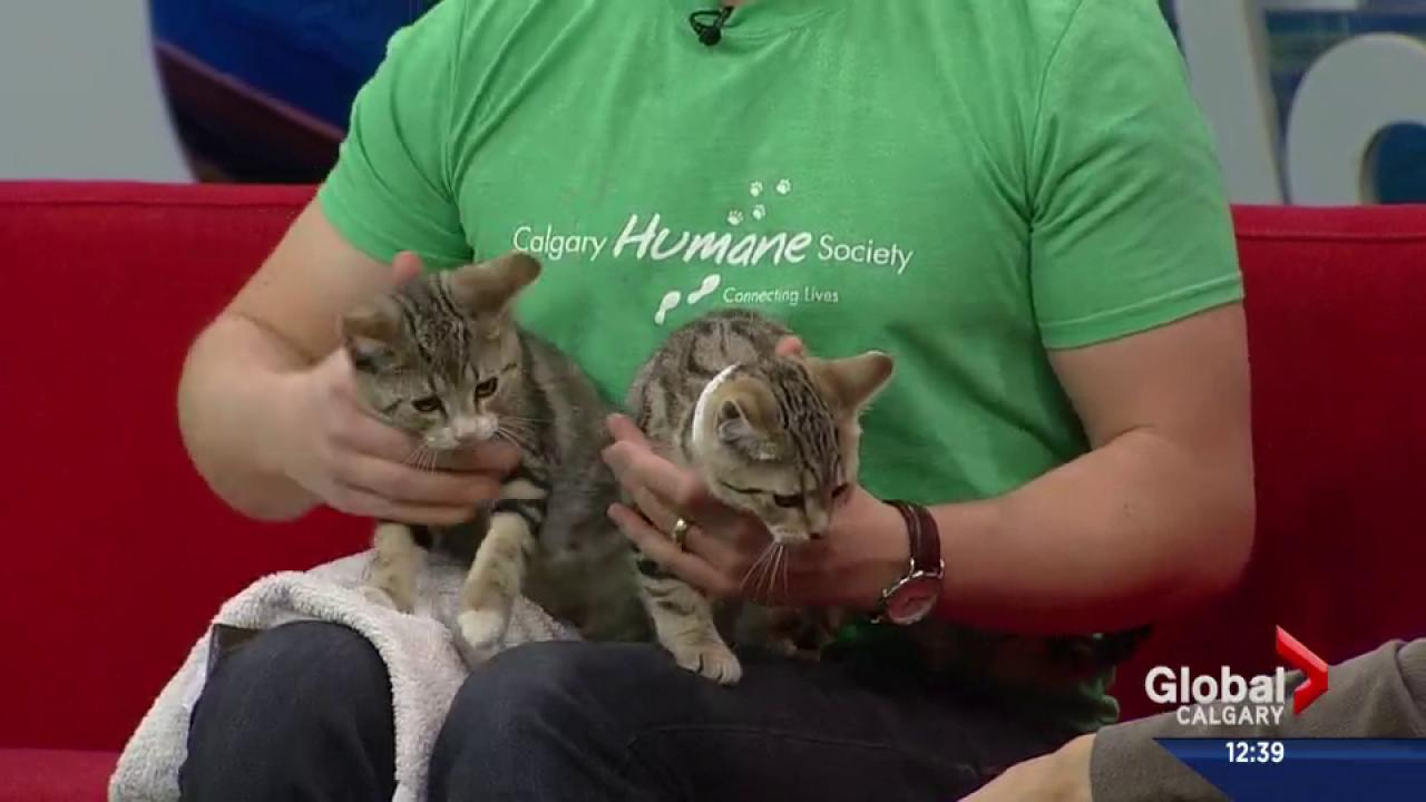 Pet of the Week: Twix and Taffy