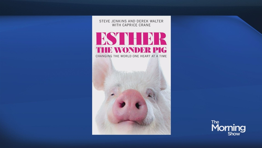 How Esther The Wonder Pig Changed Campbellville Watch News Videos