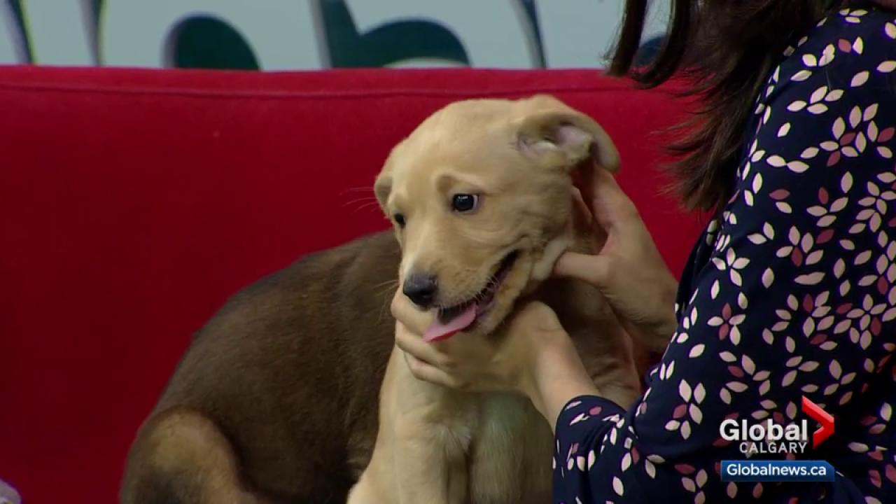 Calgary Humane Society Pet of the Week: Oh Henry and Twix