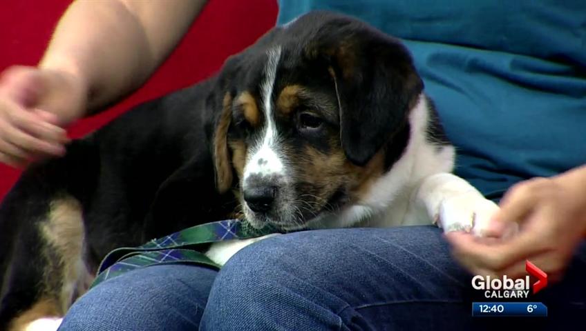 Cochrane & Area Humane Society Pet of the Month: Hamlet