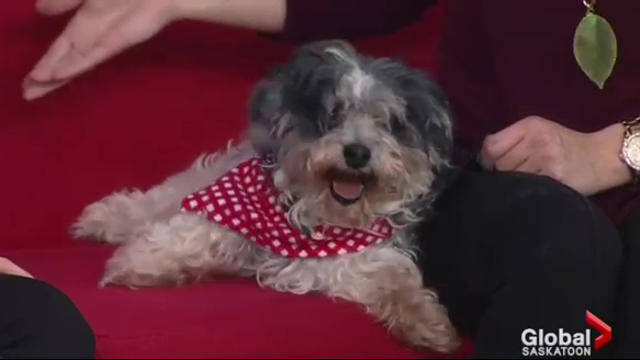 Adopt a Pet: Sander looking for his new home
