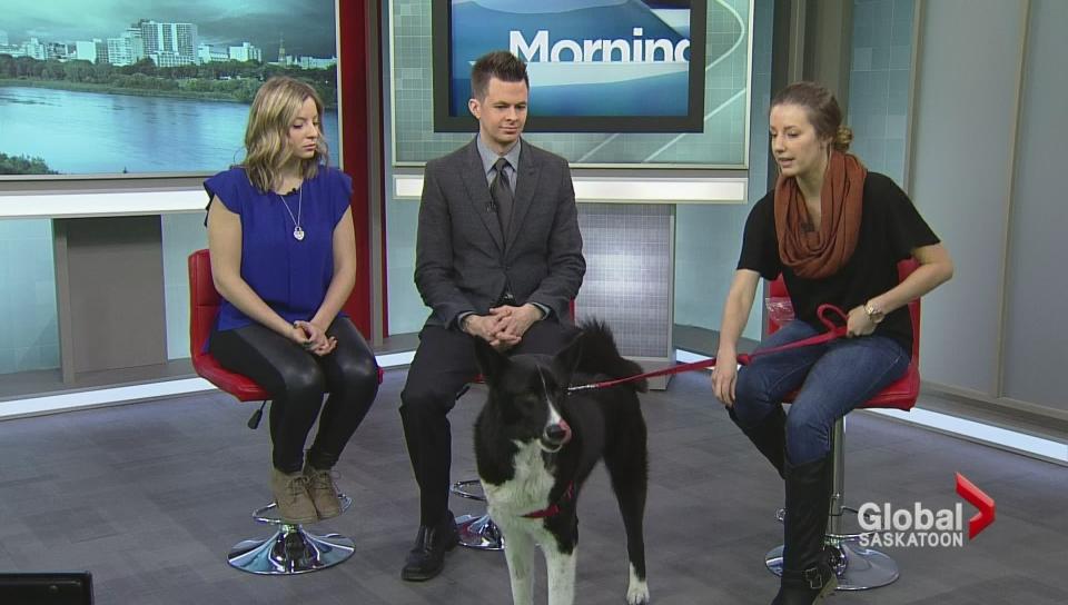 Adopt a Pet – New Hope Dog Rescue
